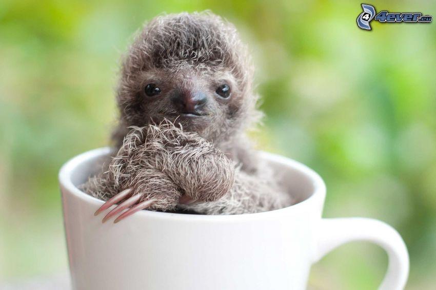sloth, cub, cup