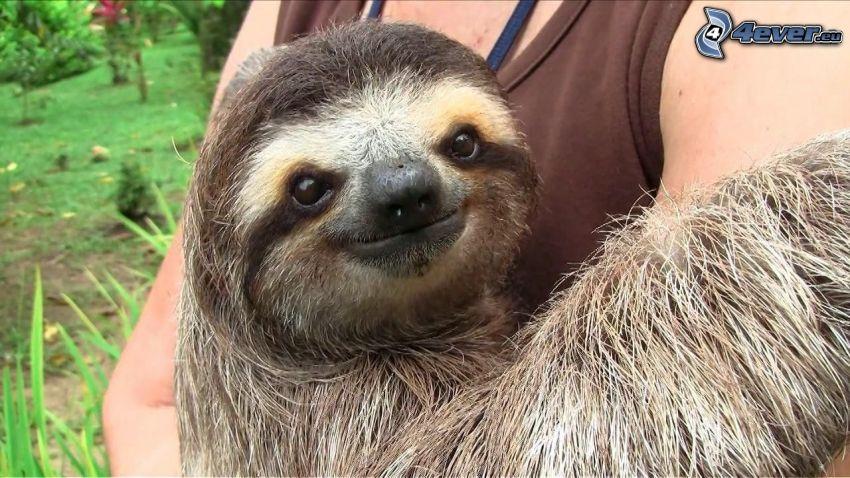 sloth, hug