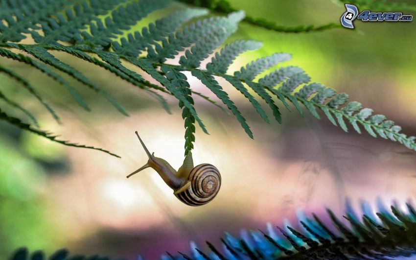 snail, ferns
