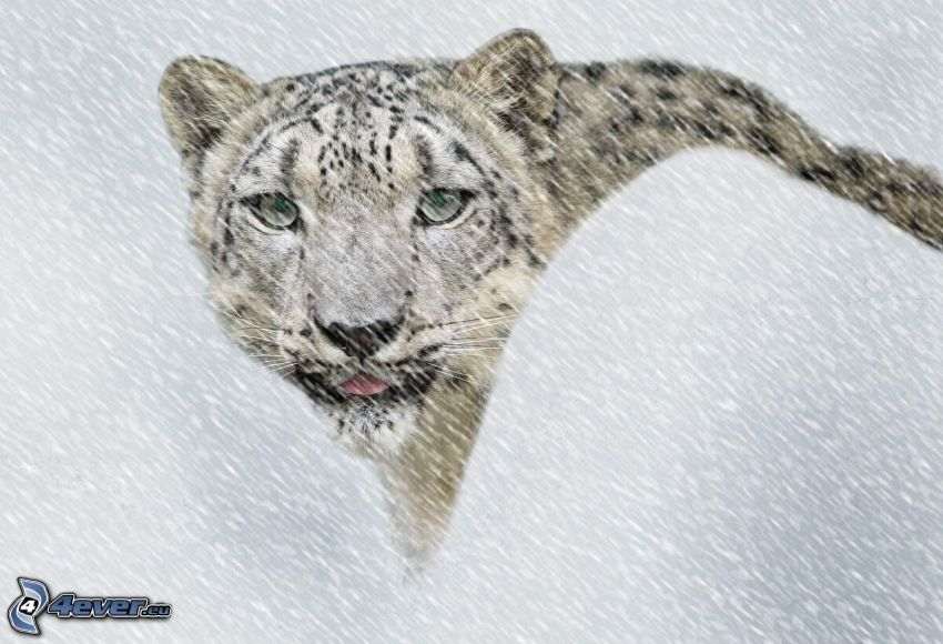 snow leopard, snowfall