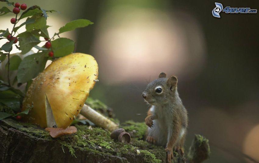 squirrel, mushroom