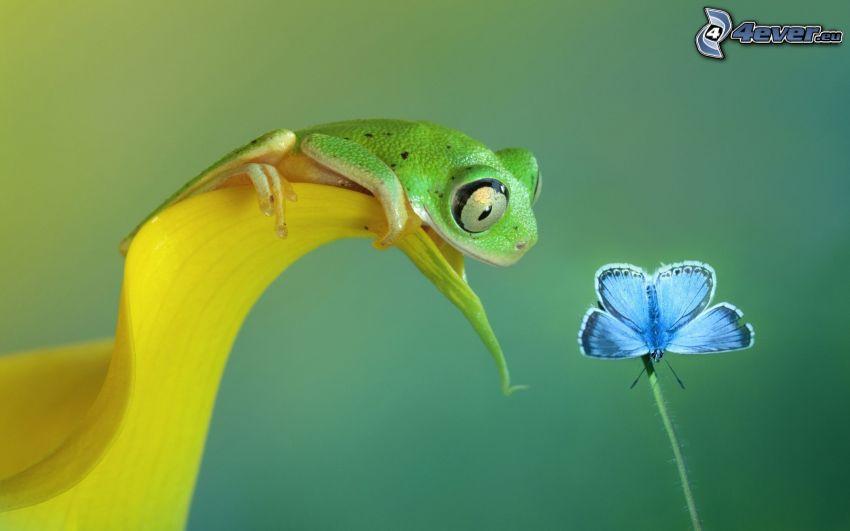 tree-frog, leaf, blue butterfly