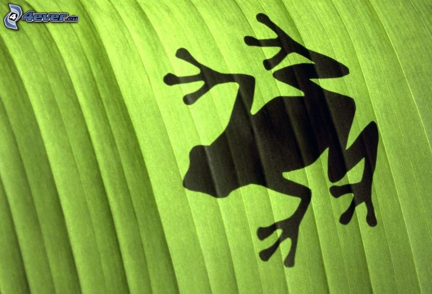 tree-frog, silhouette