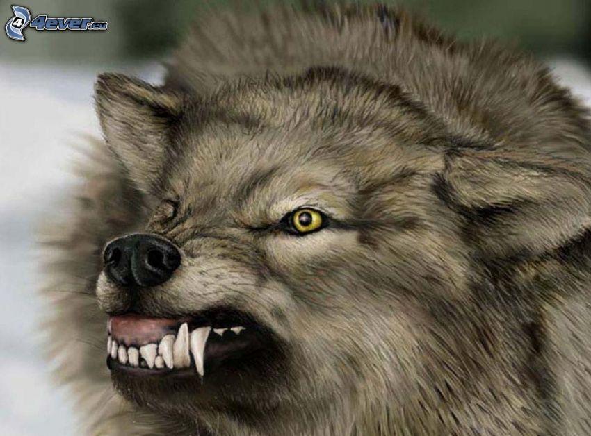 wolf, teeth, anger