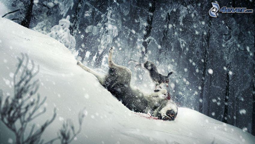 wolves, ski slope, snow