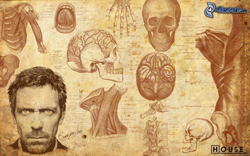 Dr. House, brain, skeleton, the human body