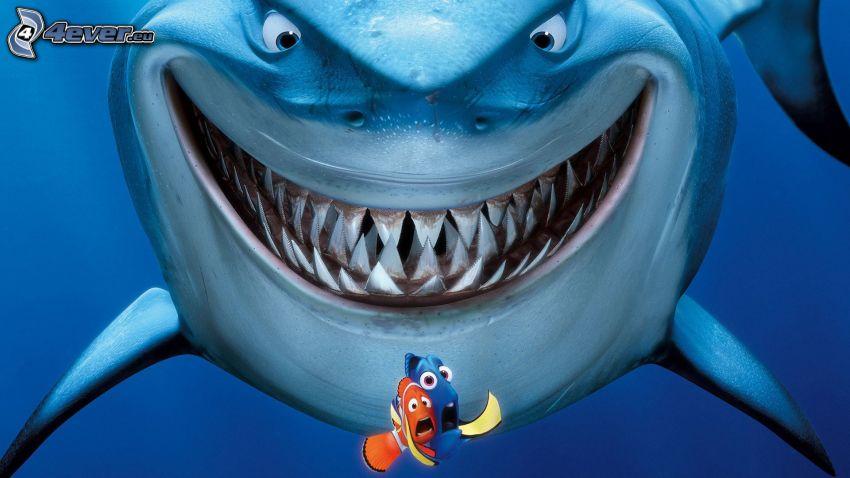 Nemo, shark