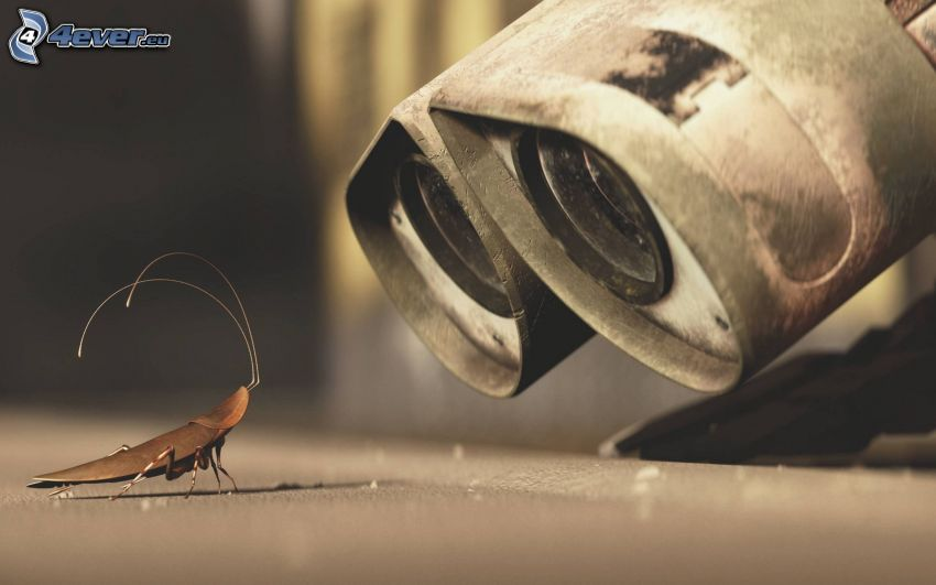 WALL·E, beetle