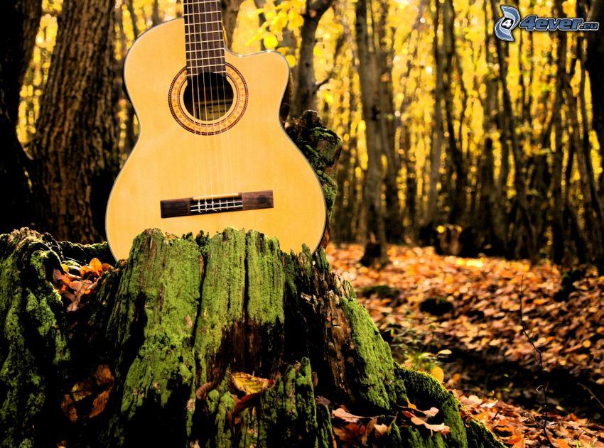 guitar, stump, forest
