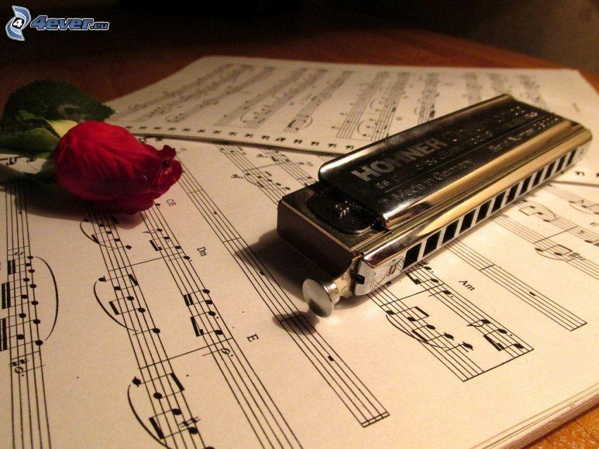 harmonica, red rose, sheet of music