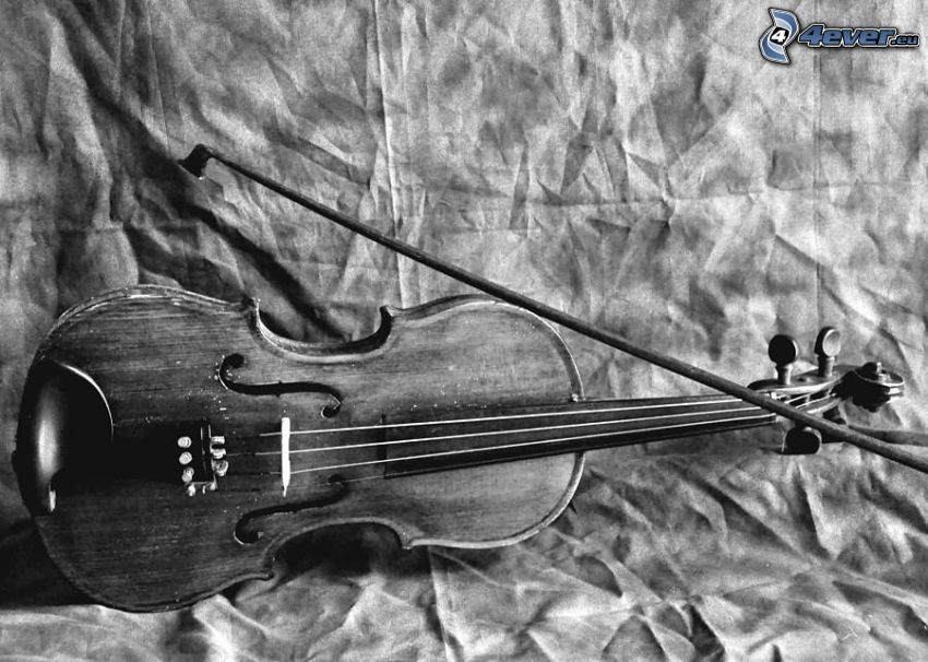 violin, bow, black and white photo