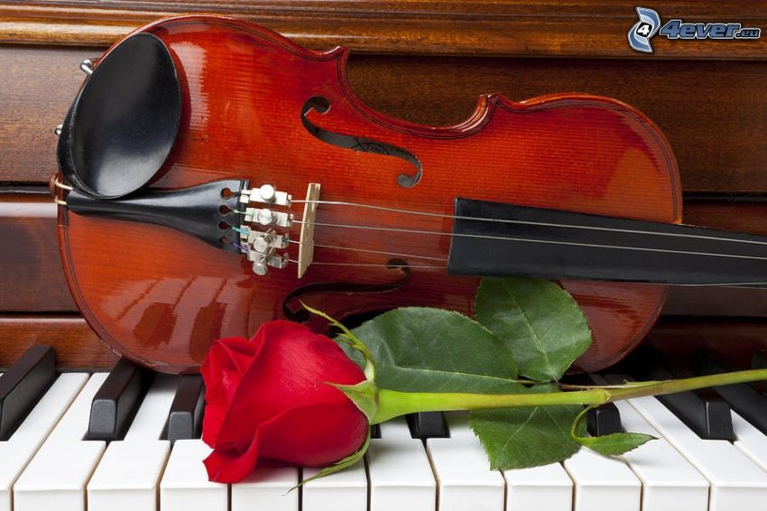 violin, red rose, piano