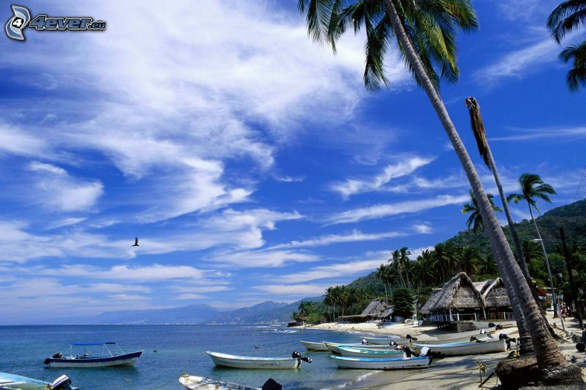 a boat near the shore, palm trees, sea, beach
