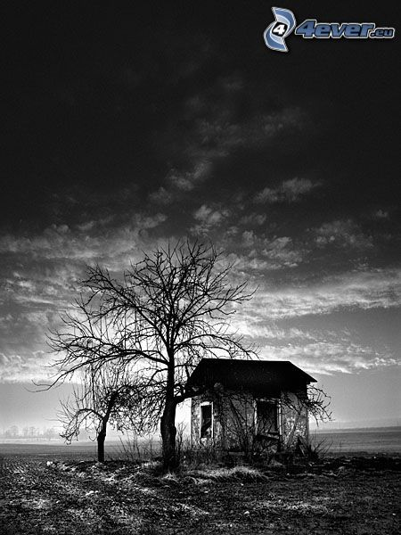 abandoned house, dry tree, shed, black and white