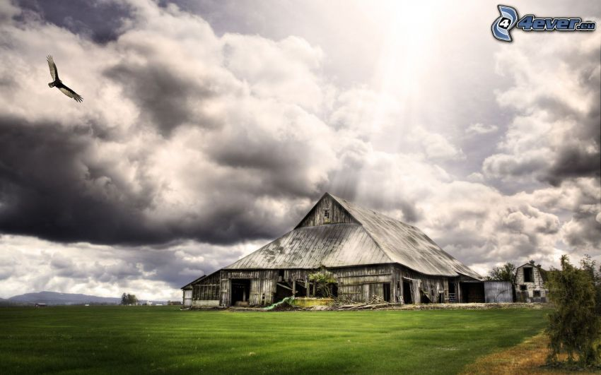 american farm, wooden house, clouds, eagle, sunbeams