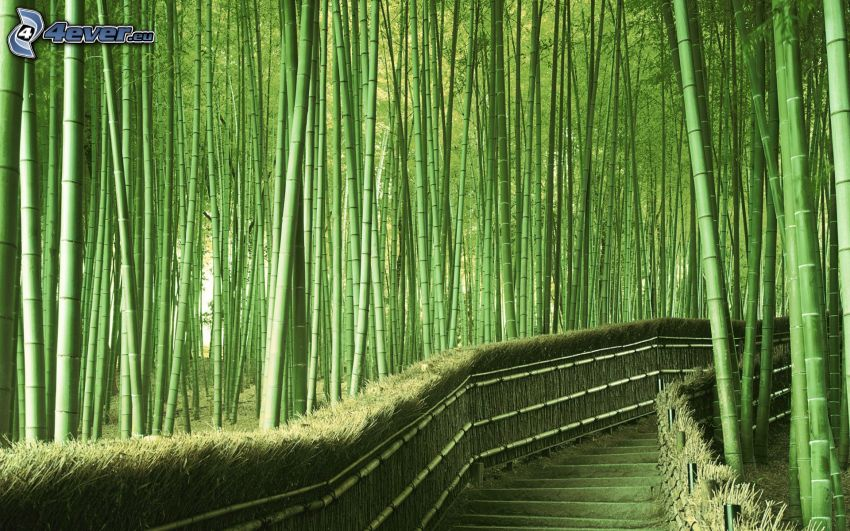 bamboo forest, sidewalk, stairs