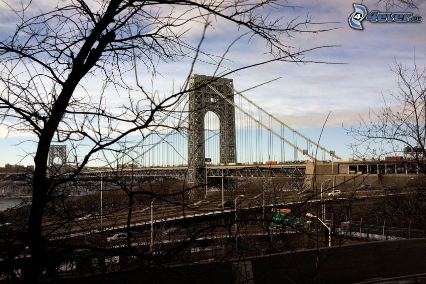 George Washington Bridge, trees