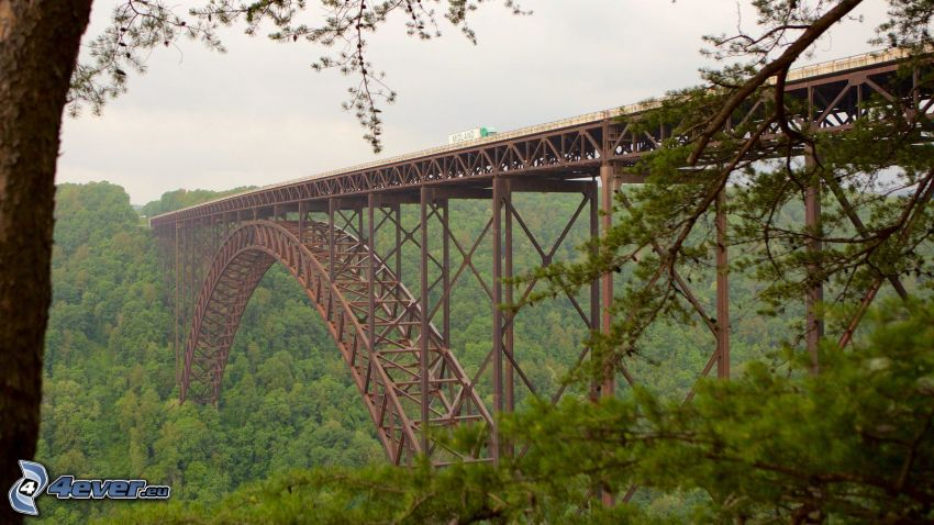 New River Gorge Bridge, forest