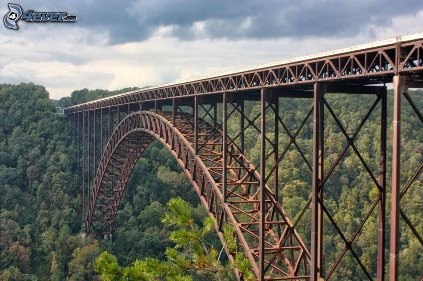 New River Gorge Bridge, forest