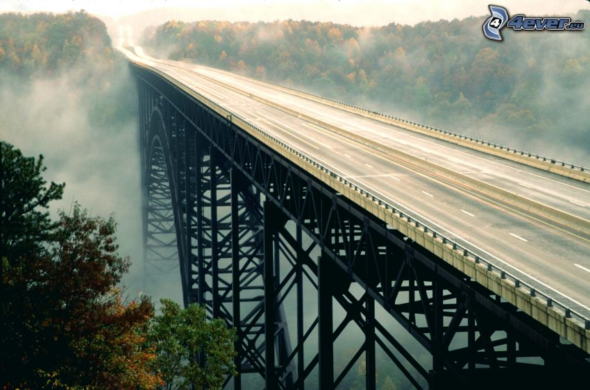 New River Gorge Bridge, highway, forest