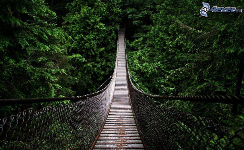 pedestrian bridge, coniferous forest, Canada