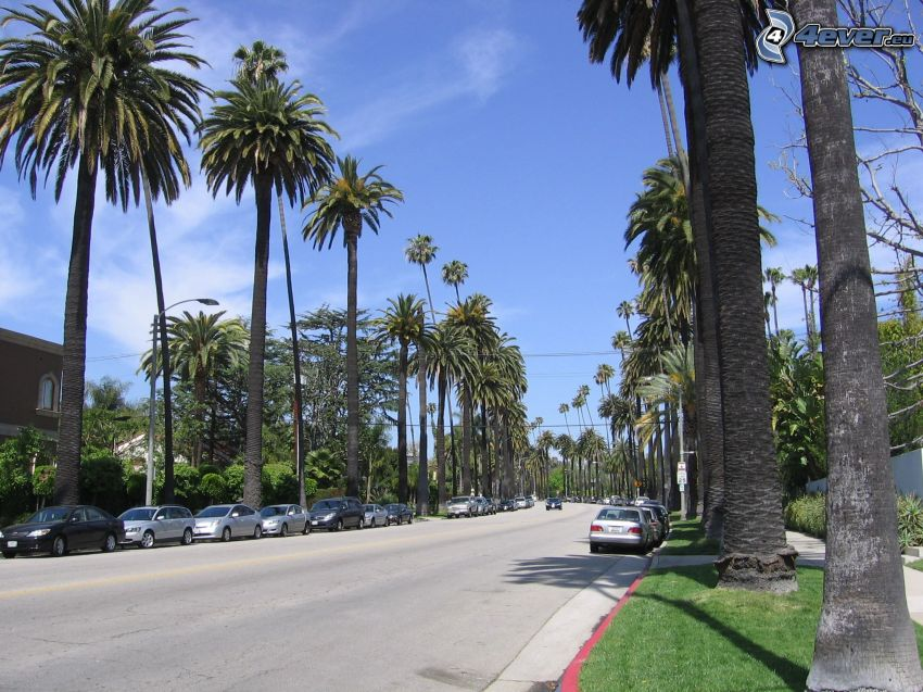 Beverly Hills, Los Angeles, California, USA, street