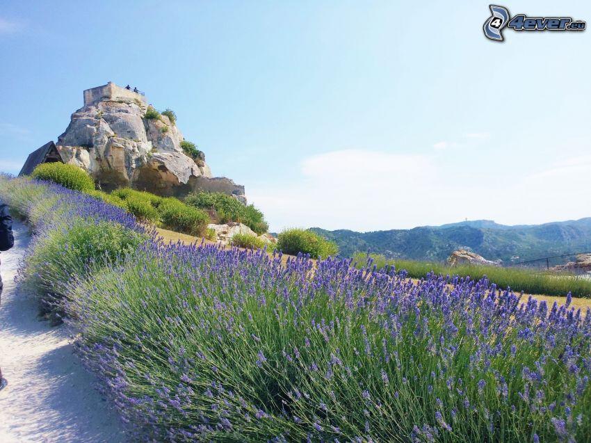 Les Baux de Provence, lavender, purple flowers