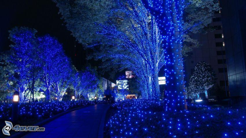 lighted trees, night