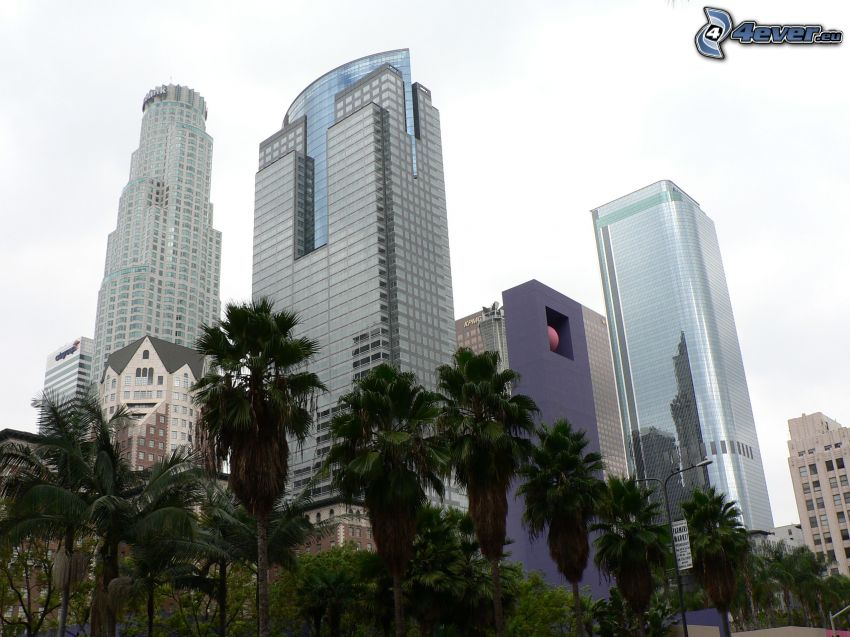 Los Angeles downtown, skyscrapers, palm trees