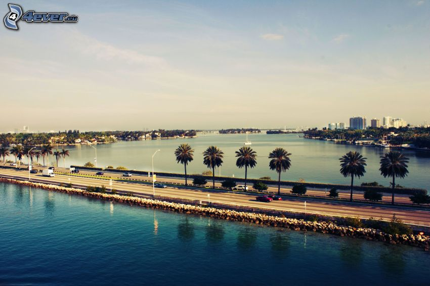 Miami, highway, palm trees, sea