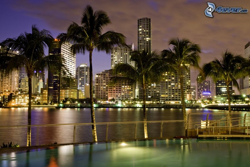Miami, skyscrapers, palm trees, night city