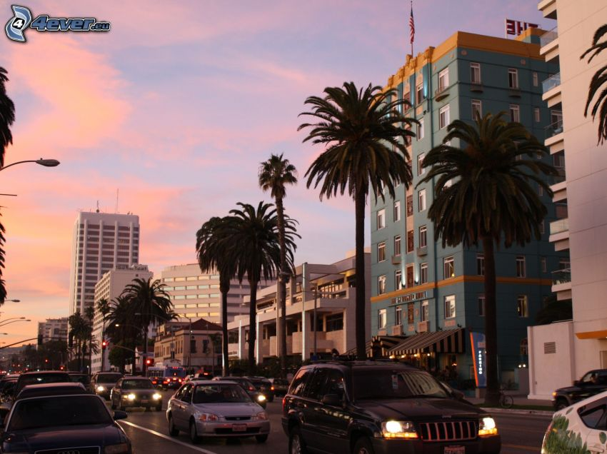 Santa Monica, evening city, palm trees, road