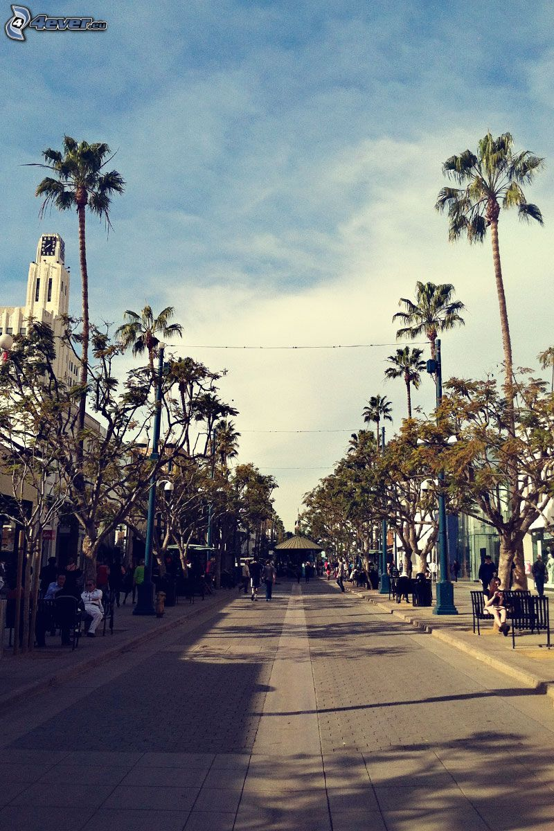 Santa Monica, street, palm trees