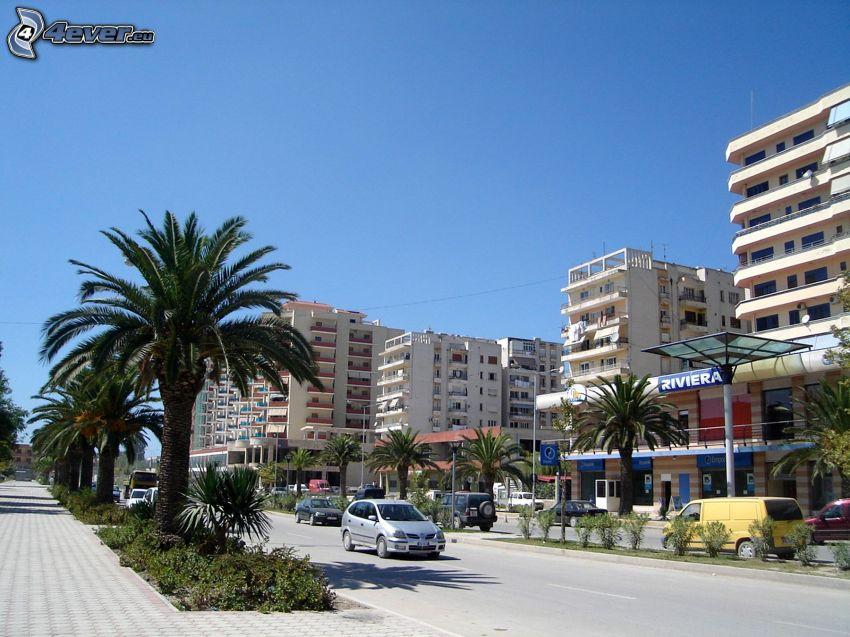 Vlora, street, palm trees