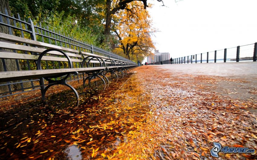 waterfront, sidewalk, benches, dry leaves