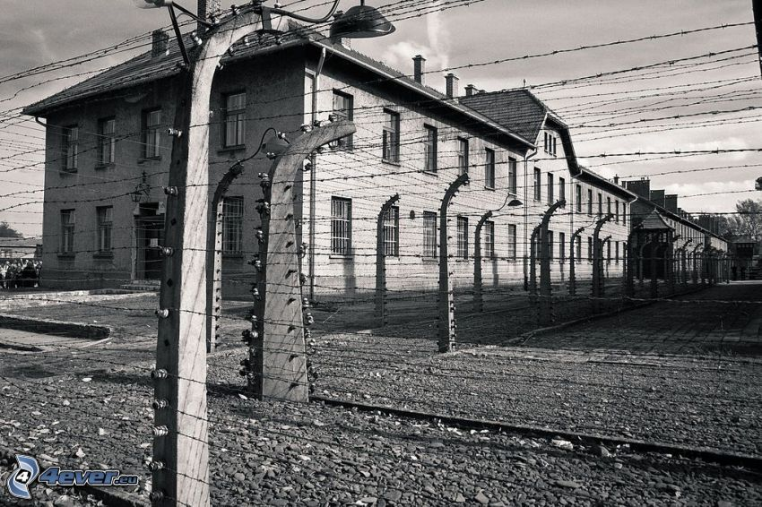 concentration camp, wire fence, Oświęcim, black and white photo