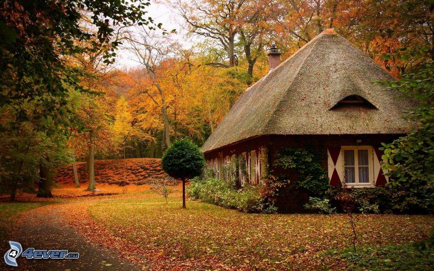 cottage, autumn trees