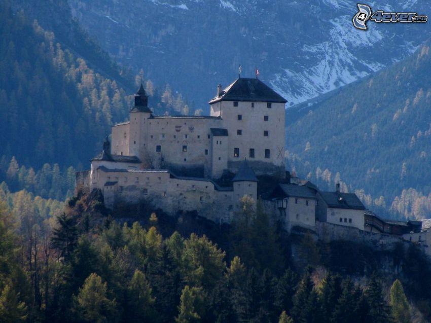 castle Tarasp, coniferous forest