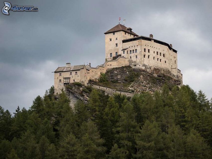 castle Tarasp, coniferous trees