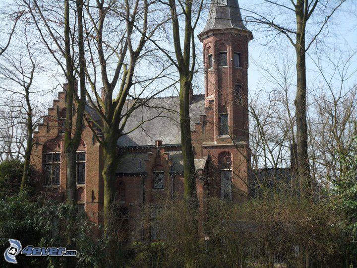 church, Belgium, trees, defoliate tree