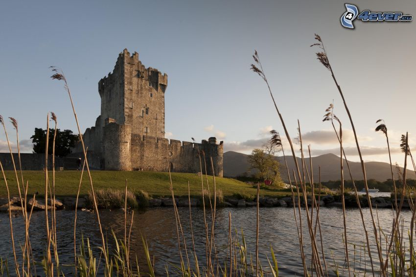 Ross Castle, River, blades of grass