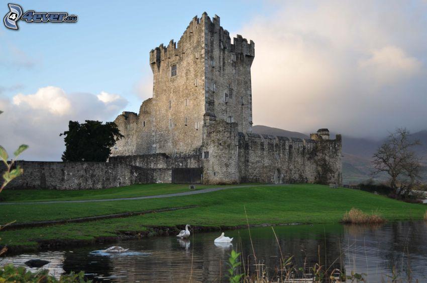 Ross Castle, swans