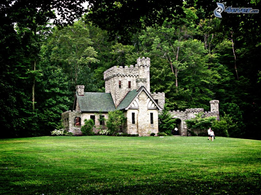 Squire's Castle, forest