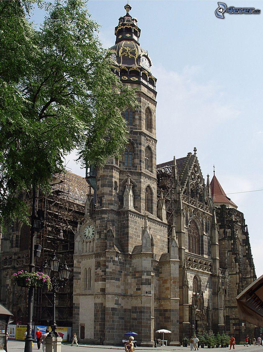 St. Elisabeth Cathedral, trees