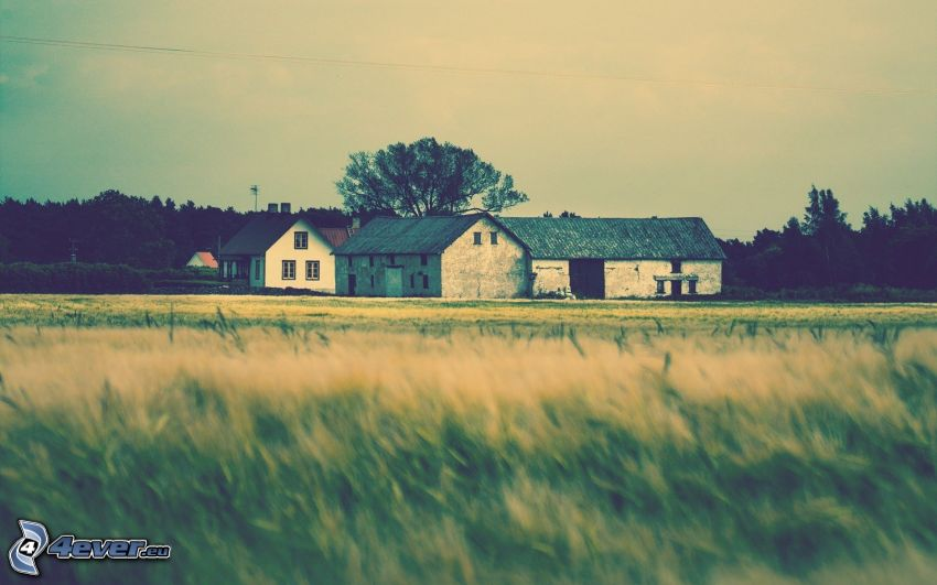 house, field