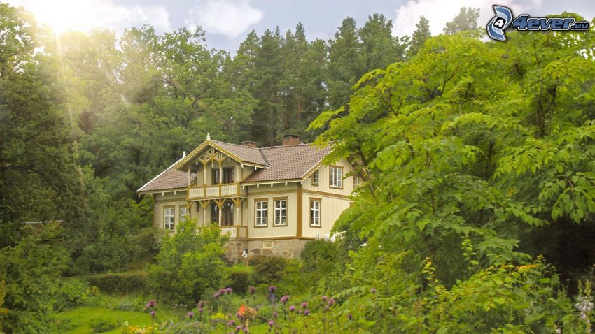 house, nature, trees, purple flowers