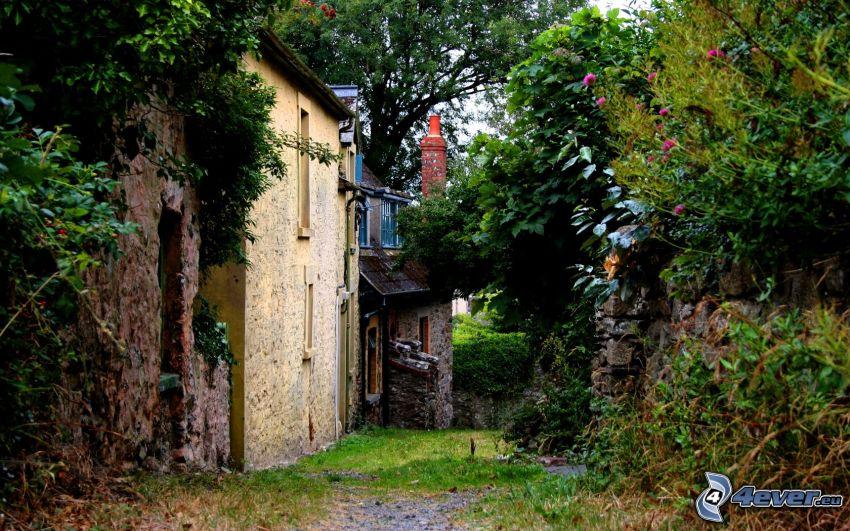 houses, greenery