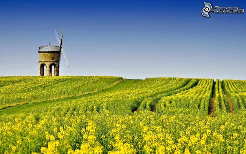 mill, rapeseed, field