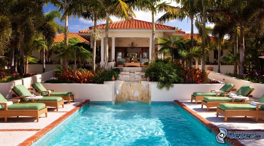 pool, lounger, palm trees, hotel