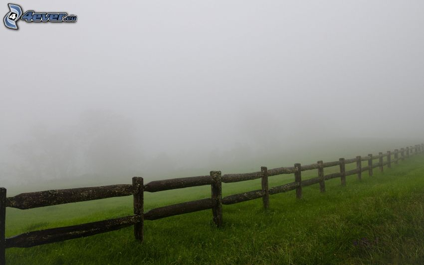 palings, fog, grass
